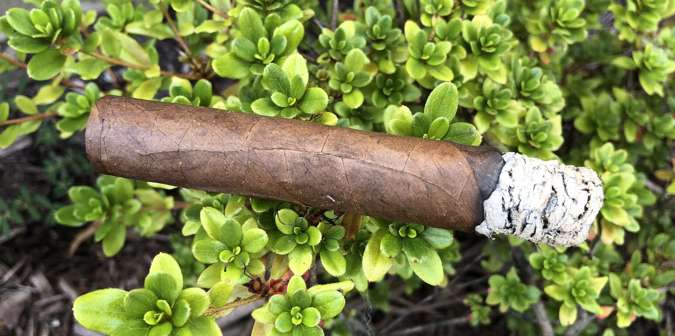 Lost & Found Plume Robusto Cigar Review